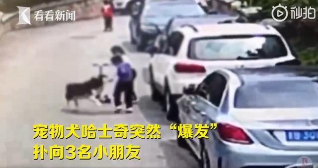 社会资讯_哈士奇咬伤3名孩子遭小区业主驱逐 狗主却以与狗子相依为命为由 ...