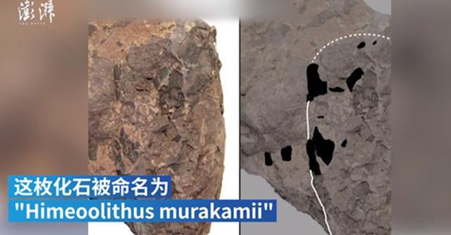 社会资讯_重约10克!日本发现最小恐龙蛋化石 原来高大的恐龙群中也会有 ...