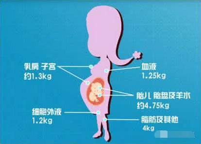 怀孕22周胖多少正常_怀孕33周胎动频繁正常吗_怀孕 15周 胖