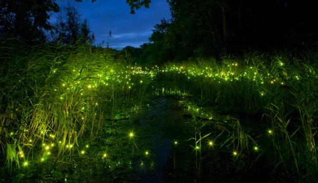 萤火虫为什么闪闪发光 萤火虫发光的小秘密
