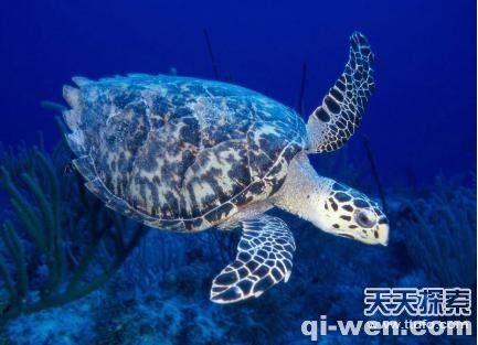 香港特码这10种动物竟能够长生不老 一起长长见识吧!