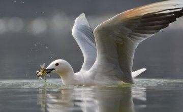 """这个冬天,www.99777.com我在""""处处闻啼鸟"""""""
