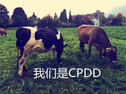 网络语cpdd是什么梗啥意思 cpdd出处来源哪里常见用法介绍