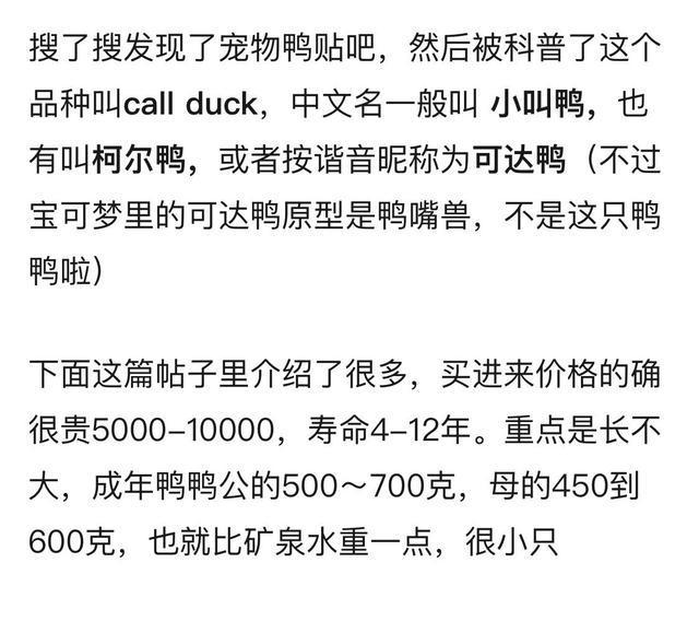 王思聪买的鸭子模样娇俏又可爱 柯尔鸭是什么品种多少钱