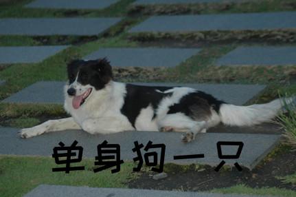 三朝元老单身狗是什么意思什么梗? 单身狗的新标签了解一下