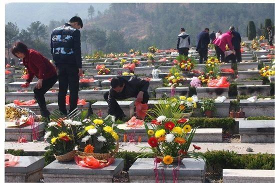 公墓祭祀鲜花被盗
