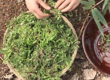 春季养生正当时 农村的这几种野菜养肝补钙还能增强自身免疫力