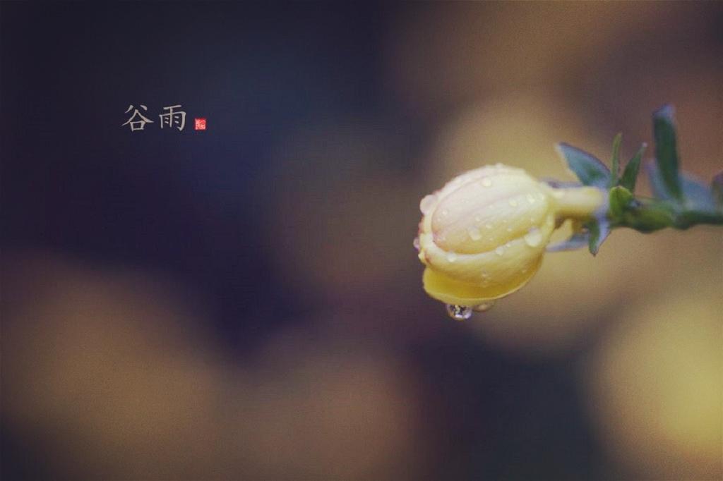 谷雨节气祝福语大全简短一句话 2019谷雨朋友圈发什么合适
