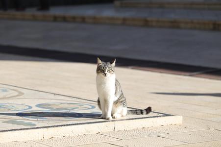 抖音猫性人格是什么梗? 猫性人格的特点你了解多少?