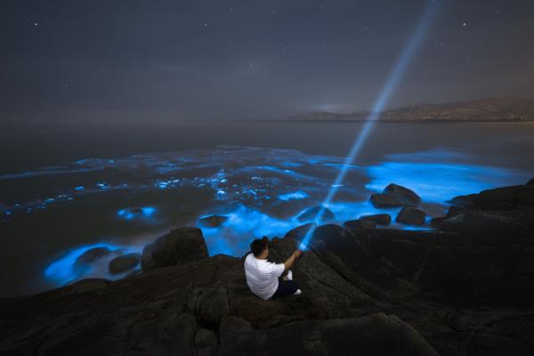 平潭蓝眼泪在哪个海滩 你了解它的本体究竟是什么吗