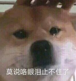 舔狗模式已开启 舔狗舔到最后一无所有表情包合集图片