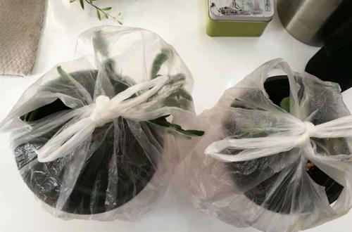 什么是植物套袋保湿法 怎么给植物套袋保湿你造吗?