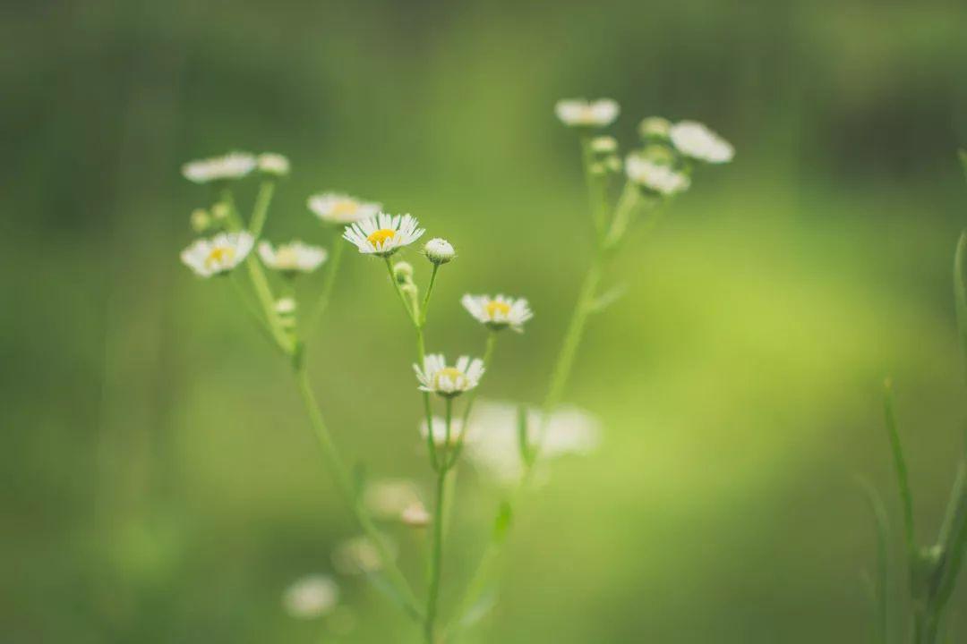 清明节文明祭祀倡议 时值一年春草绿