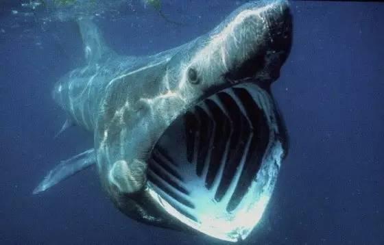知识科普 哪种动物一生都在换牙?