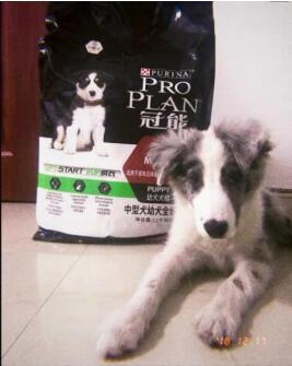 什么狗粮吃完对狗狗好?