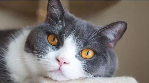 小猫打喷嚏如何办 是生病了吗?