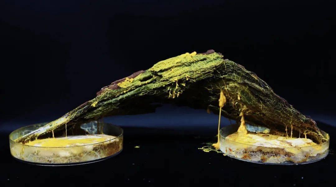 90后女孩拍摄微观菌奇幻世界 像西米露又似咸蛋