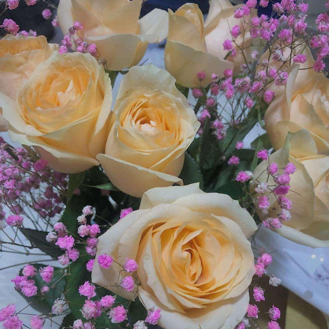 香槟玫瑰的花语是什么意思