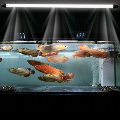 观赏鱼最适用的过滤方法是什么?